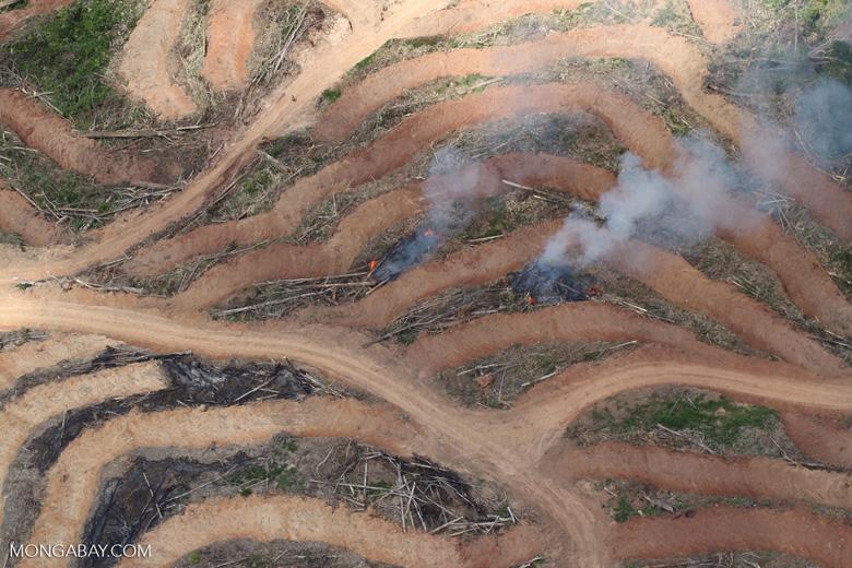 Fire burning on an oil palm plantation -- sabah_1859