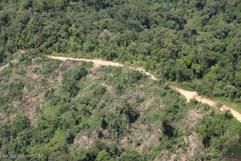 Heavily logged forest -- sabah_1865