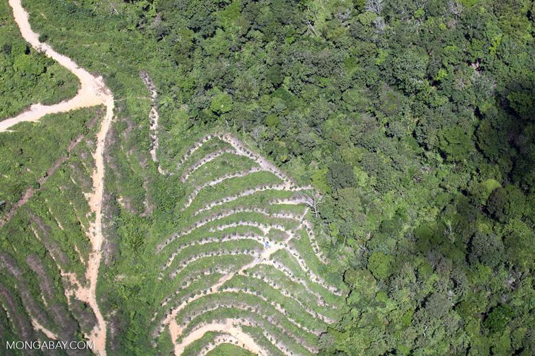 deforestation for oil palm -- sabah_1884