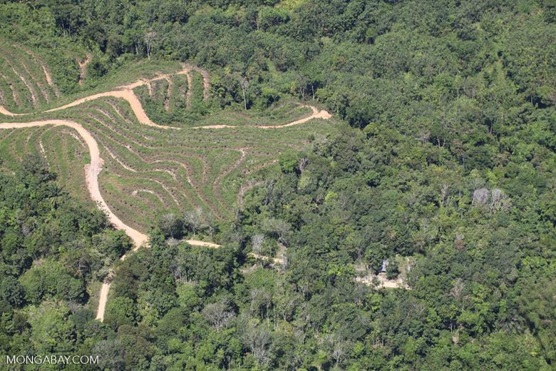 deforestation for oil palm -- sabah_1887