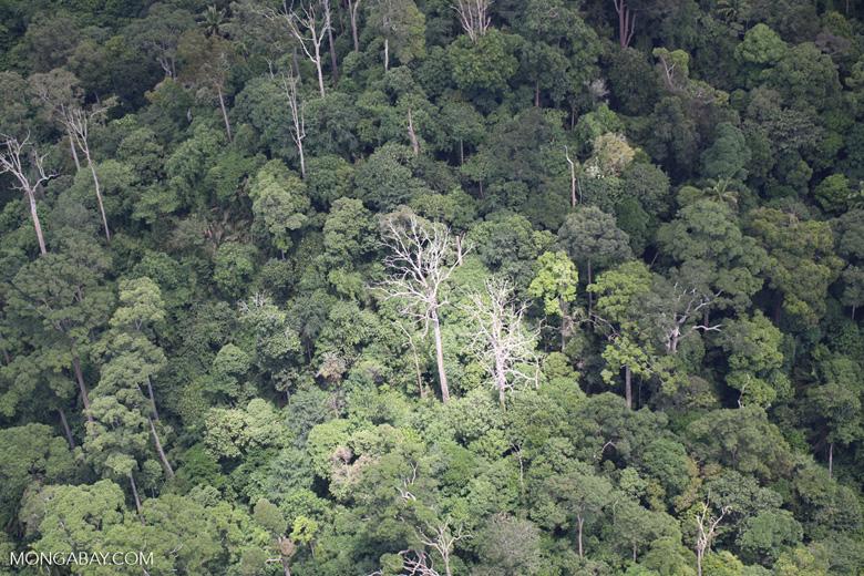 Jungle in Borneo -- sabah_1897