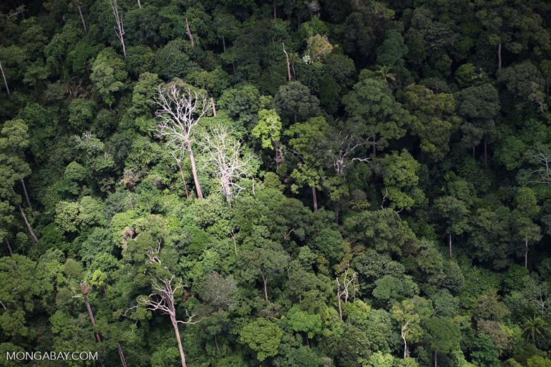 Forest in Sabah -- sabah_1900