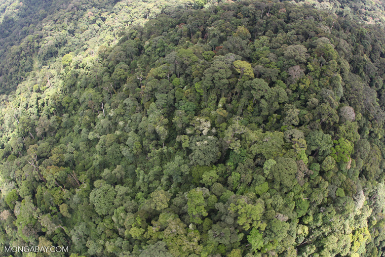 Borneo forest -- sabah_1905