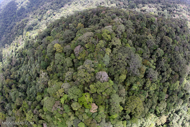 Jungle in Borneo -- sabah_1914