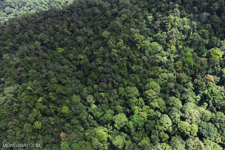 Jungle in Borneo -- sabah_1951
