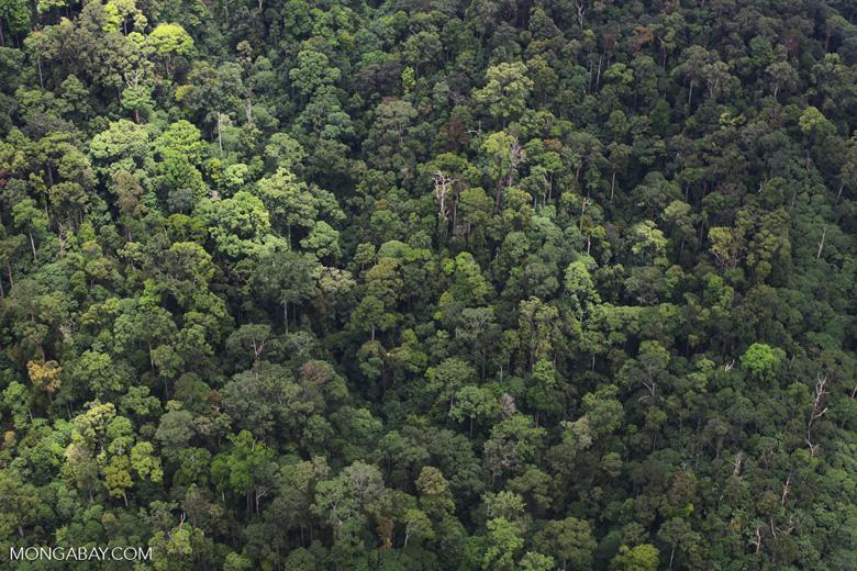 Rain forest in Malaysian Borneo -- sabah_1965
