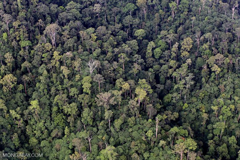Rainforest in Malaysian Borneo -- sabah_1982