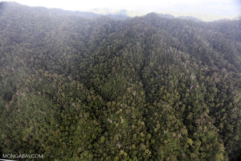 Rain forest in Borneo -- sabah_1997