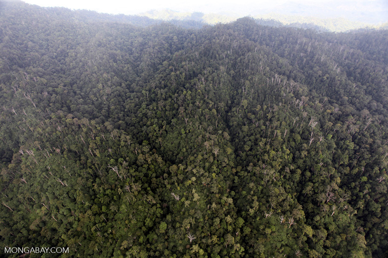 Malaysian Borneo forest