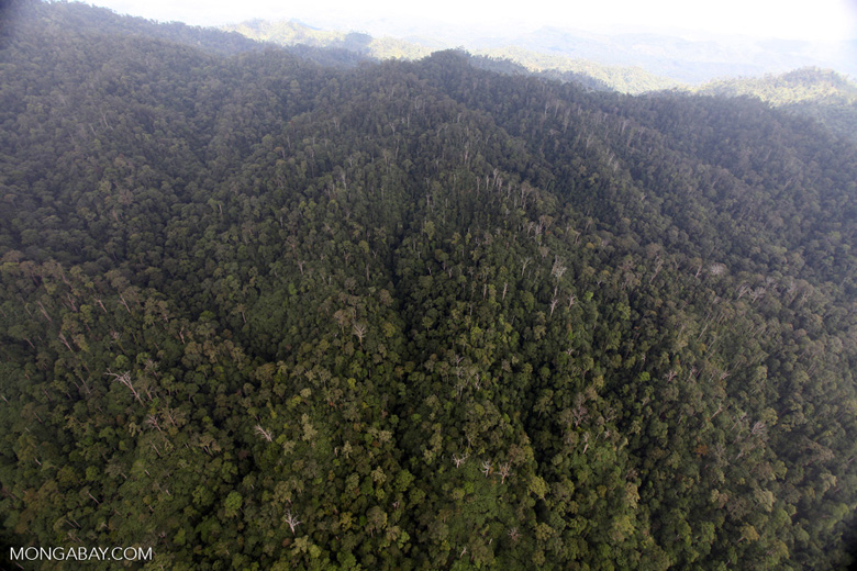 Rainforest in Malaysian Borneo -- sabah_2000