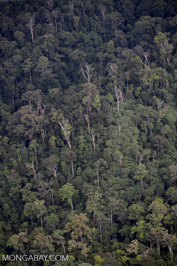 Jungle in Borneo -- sabah_2016