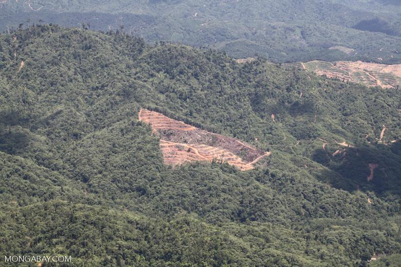 Deforestation in Borneo -- sabah_2024
