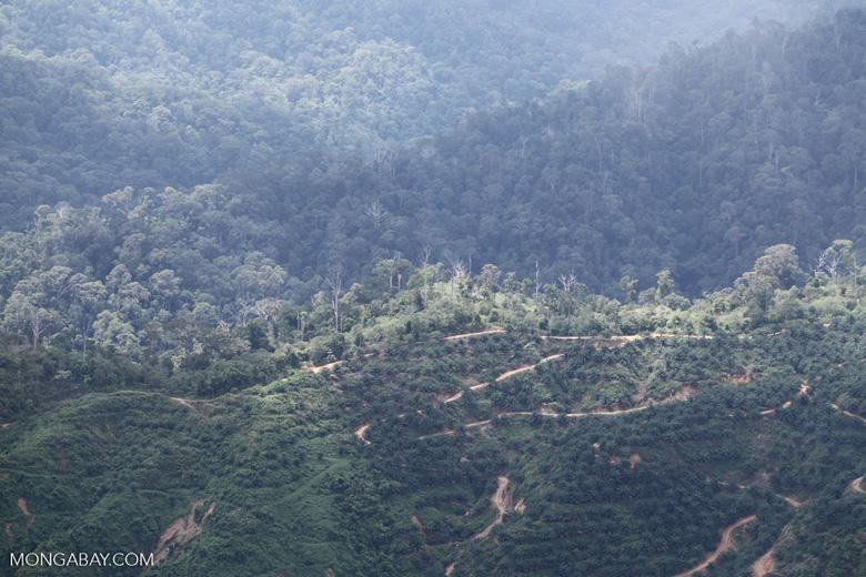 Deforestation in Borneo -- sabah_2032