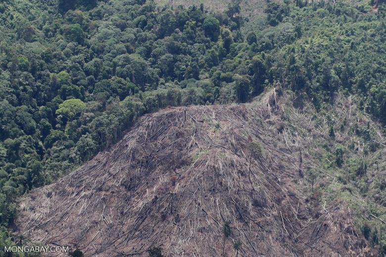 Deforestation in Borneo -- sabah_2041