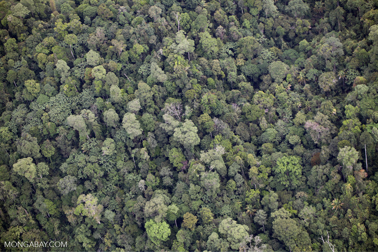 Borneo rainforest in Sabah -- sabah_2060