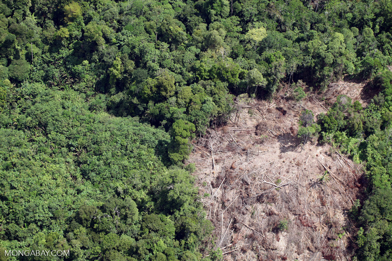 Deforestation in Borneo -- sabah_2061