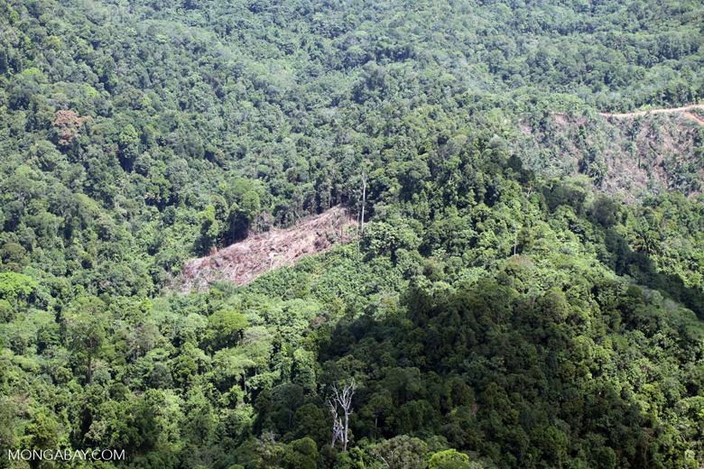 Deforestation in Borneo -- sabah_2081