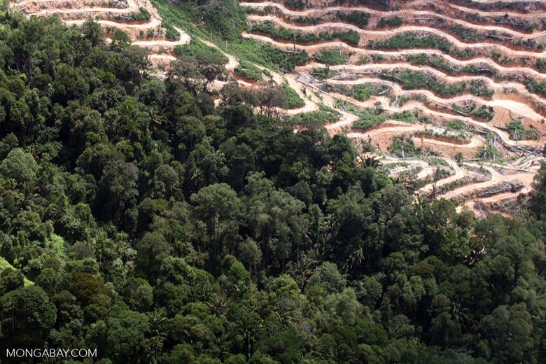 Deforestation in Borneo -- sabah_2084