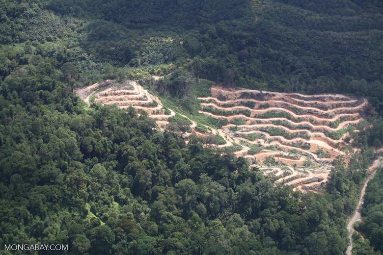 Deforestation in Borneo -- sabah_2085