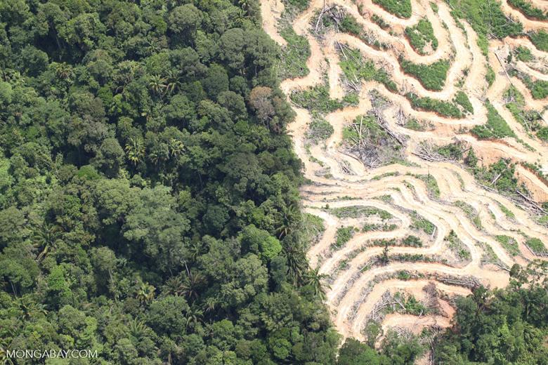 Deforestation in Borneo -- sabah_2095