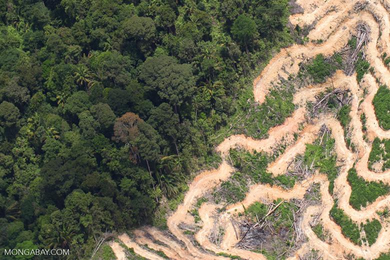 Deforestation in Borneo -- sabah_2097