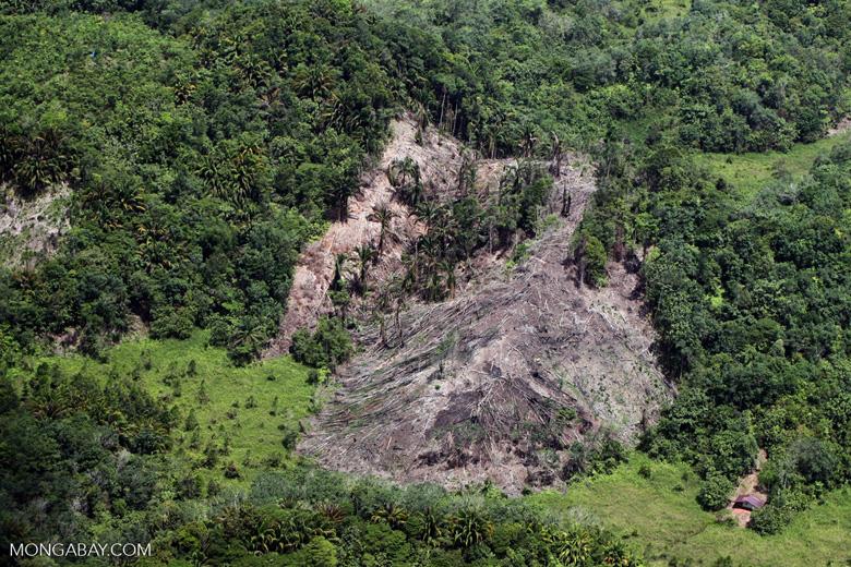 Deforestation in Borneo -- sabah_2112