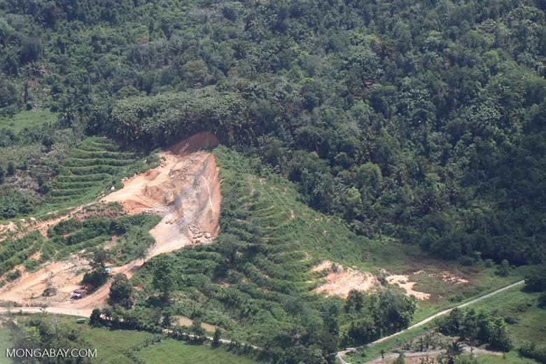 Deforestation in Borneo -- sabah_2121