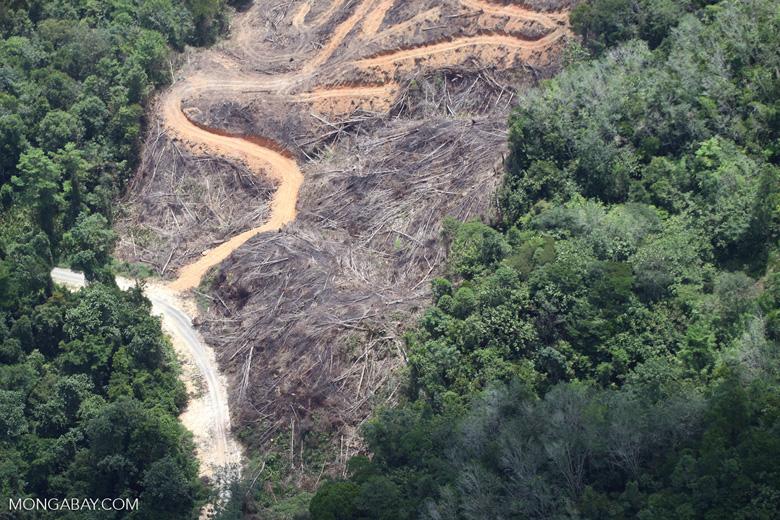 deforestation for oil palm -- sabah_2143
