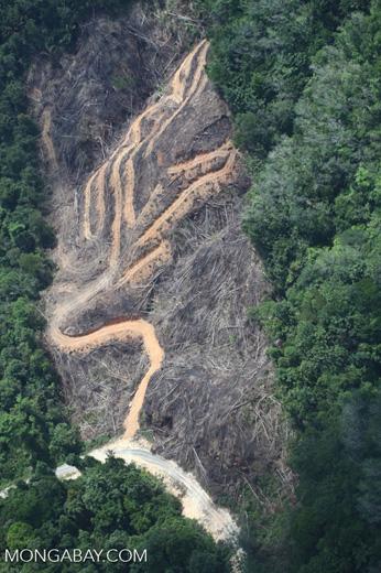 deforestation for oil palm -- sabah_2147