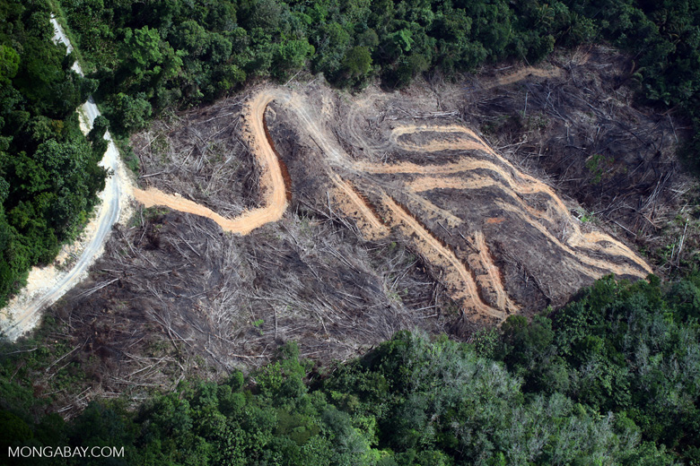 deforestation for oil palm -- sabah_2148