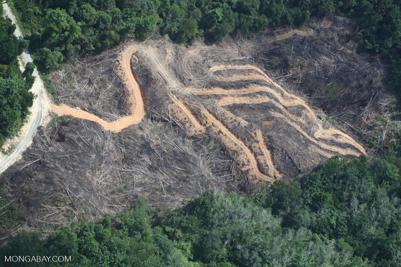 deforestation for oil palm -- sabah_2150