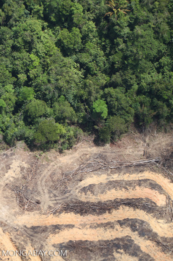 deforestation for oil palm -- sabah_2153