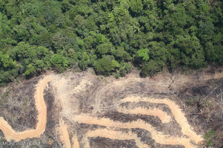 deforestation for oil palm -- sabah_2160