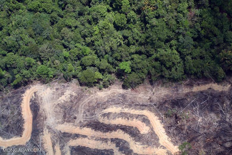 deforestation for oil palm -- sabah_2162