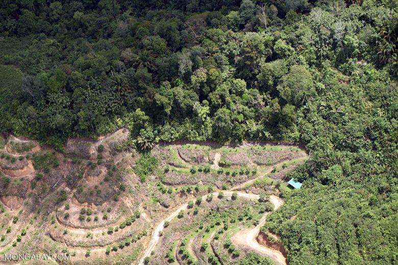 deforestation for oil palm -- sabah_2163
