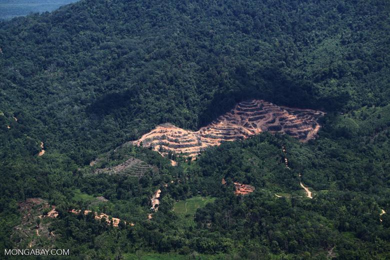 deforestation for oil palm -- sabah_2171