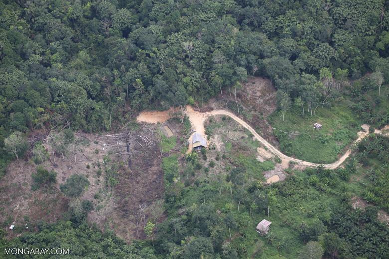 deforestation for oil palm -- sabah_2179