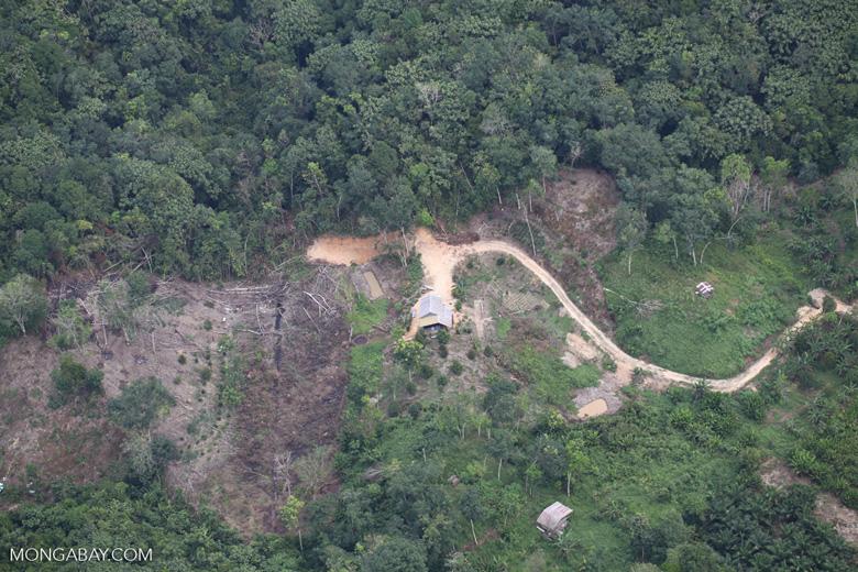 deforestation for oil palm -- sabah_2181