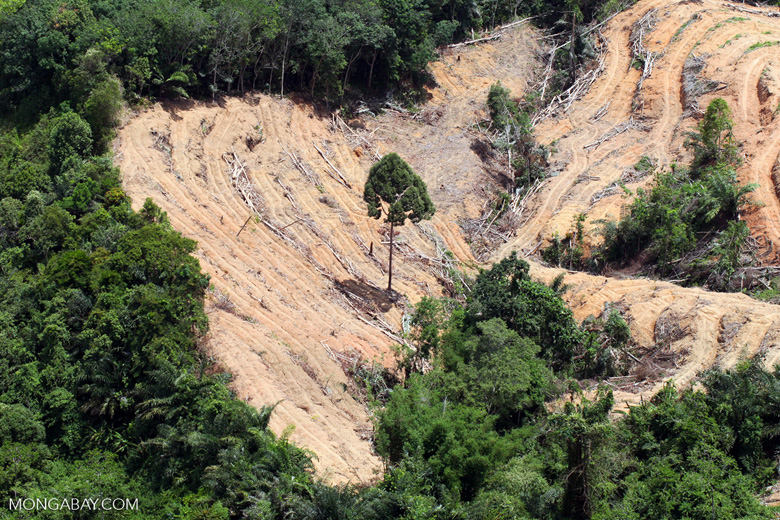 deforestation for oil palm -- sabah_2199