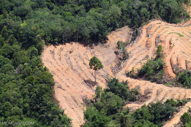 deforestation for oil palm -- sabah_2204