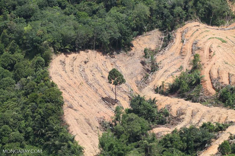 deforestation for oil palm -- sabah_2205