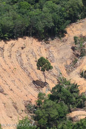 deforestation for oil palm -- sabah_2206