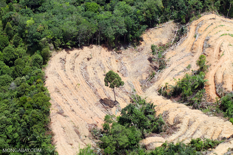 deforestation for oil palm -- sabah_2207