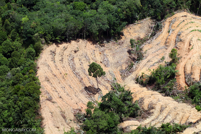 deforestation for oil palm -- sabah_2208