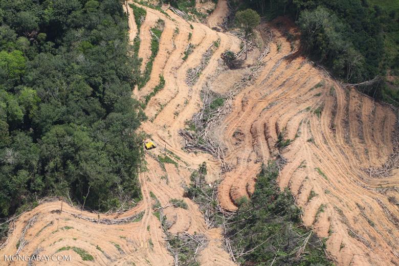 deforestation for oil palm -- sabah_2210