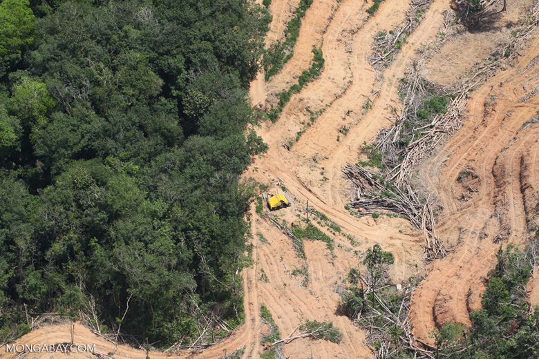 deforestation for oil palm -- sabah_2218