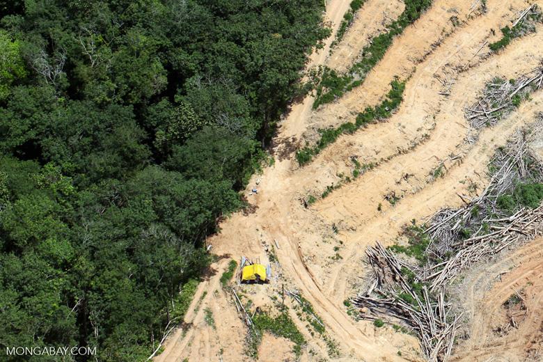 deforestation for oil palm -- sabah_2220