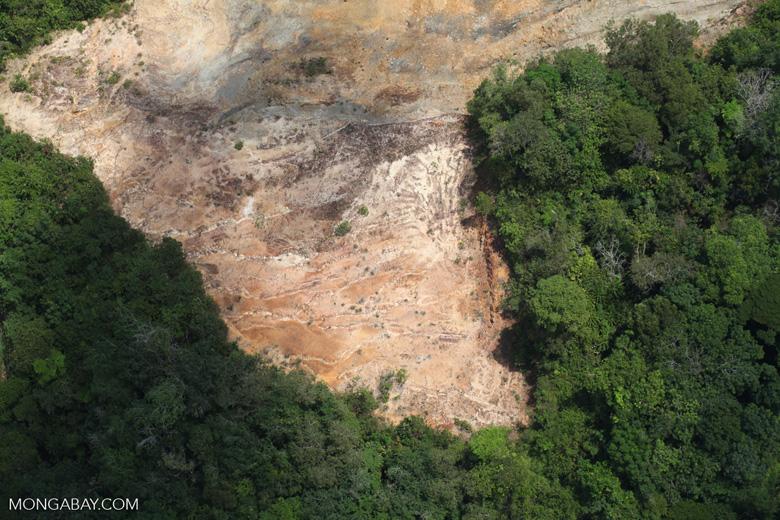 Deforestation in Borneo -- sabah_2271