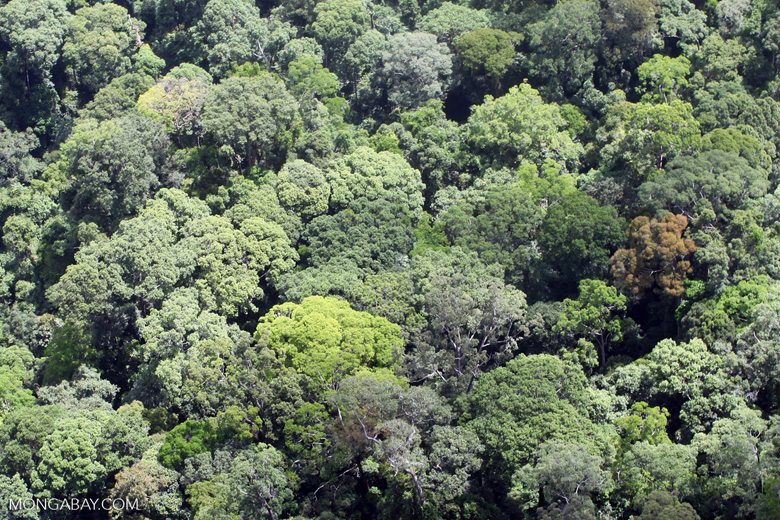 Borneo rainforest -- sabah_2295