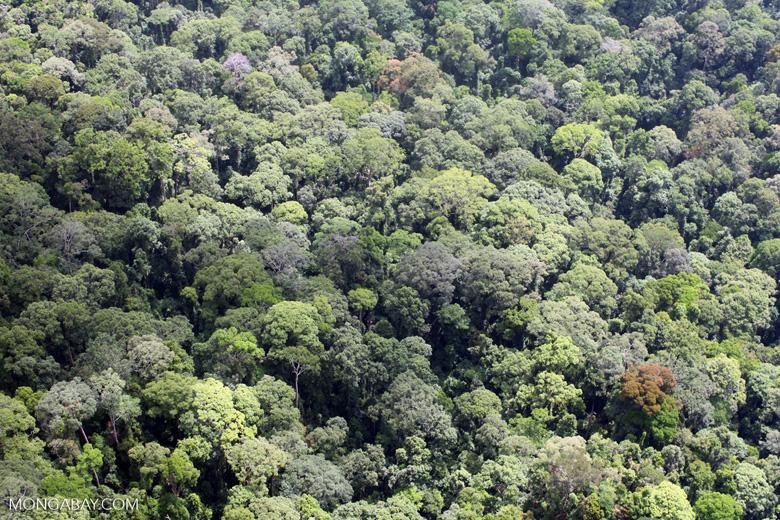 Borneo rain forest -- sabah_2296